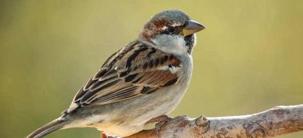 Celebrarán el Día Mundial de las Aves