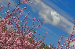 Disfruta de la ruta guiada por la floración del almendro en la Murta