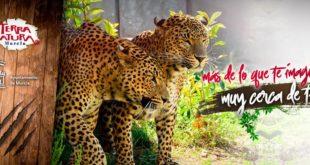 Celebrarán el Día del Padre en Terra Natura