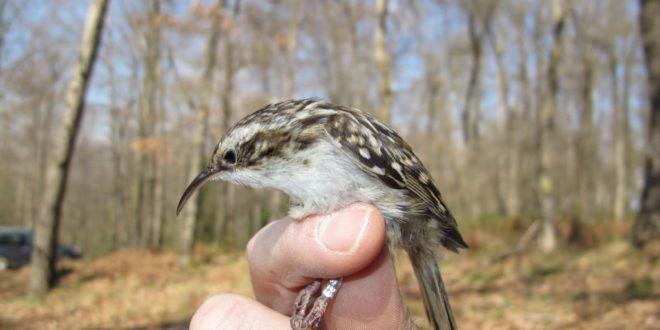"""Celebrarán el Día Mundial de las Aves con la actividad """"Anillamiento de aves"""""""