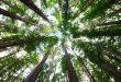 Celebrarán el Día Internacional de los Bosques