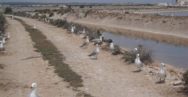 Realizaran visita guiada Ornitológica en el Parque Regional de Las Salinas